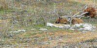 Ето как се озеленява в района на велоалеята Бургас-Сарафово