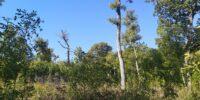 Странджа : Интензивността на провежданата сеч на места е над 80%… Вековните дървета напълно липсват.